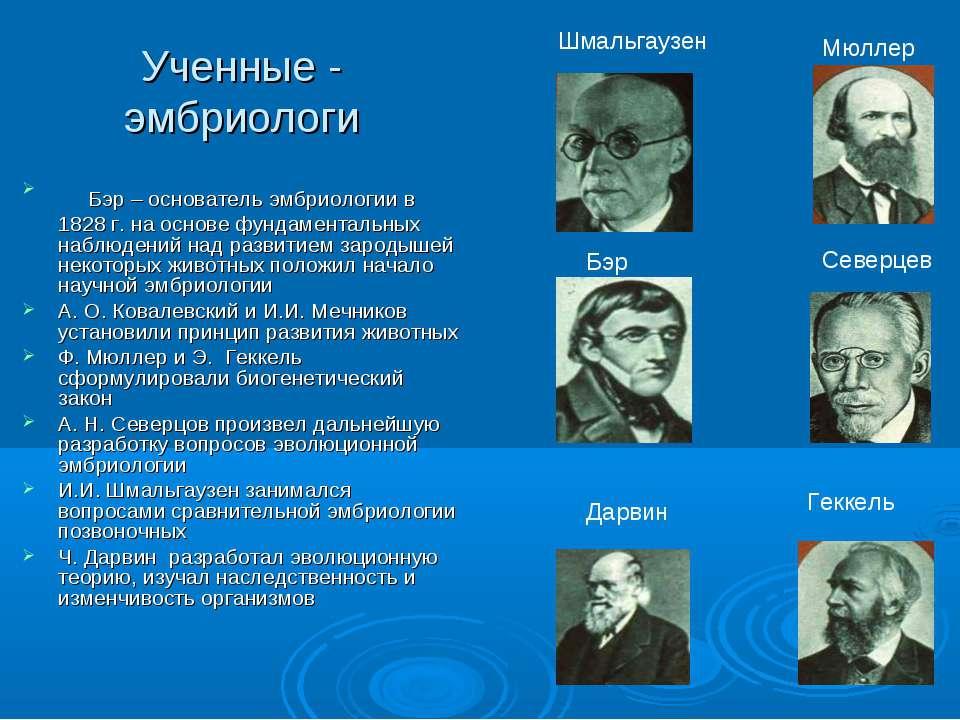 Ученные - эмбриологи Бэр – основатель эмбриологии в 1828 г. на основе фундаме...