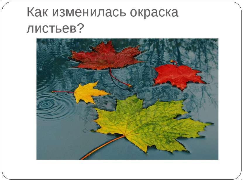 Как изменилась окраска листьев?