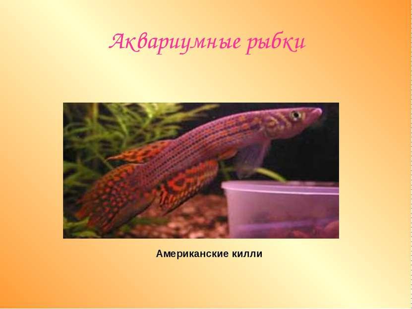 Аквариумные рыбки Американские килли