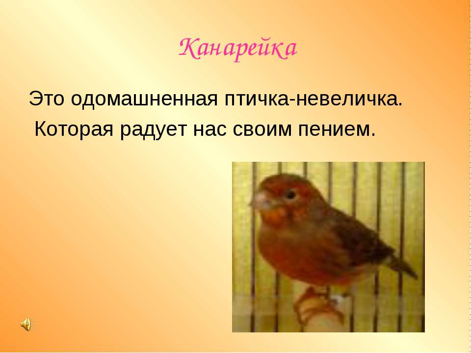 Канарейка Это одомашненная птичка-невеличка. Которая радует нас своим пением.