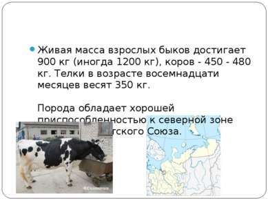 Живая масса взрослых быков достигает 900 кг (иногда 1200 кг), коров - 450 - 4...