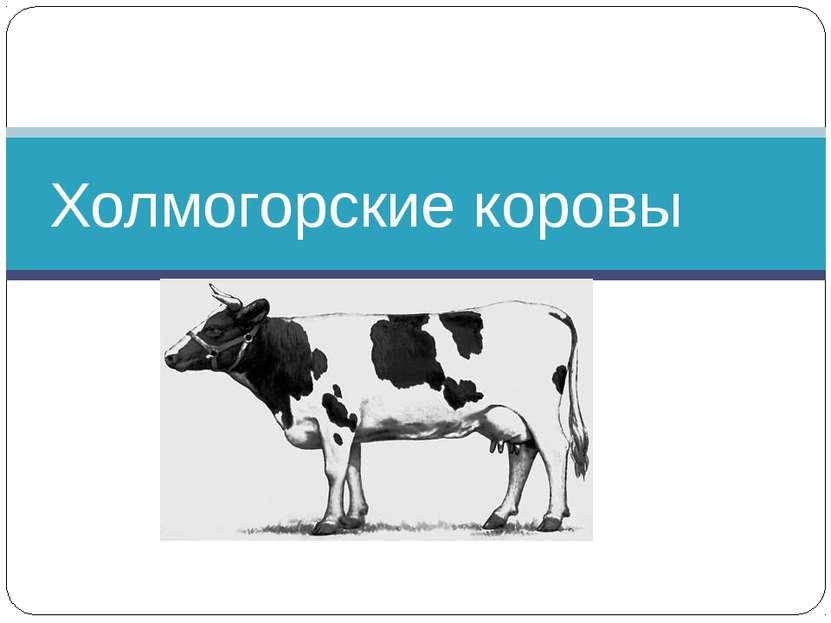 Холмогорские коровы