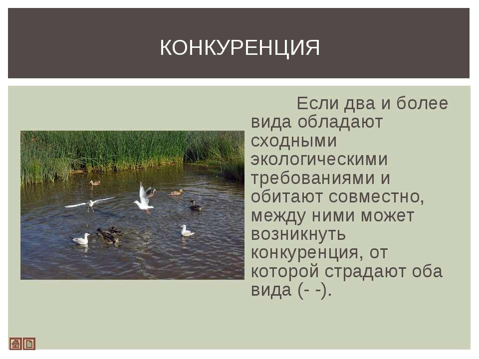 Если два и более вида обладают сходными экологическими требованиями и обитают...