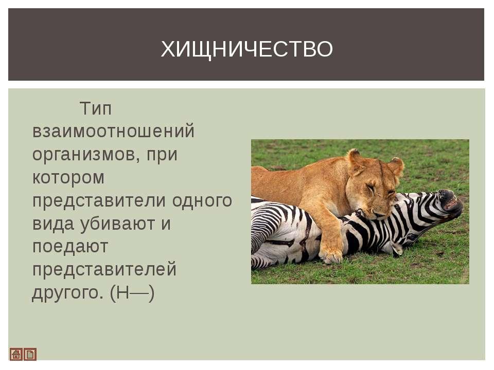 Тип взаимоотношений организмов, при котором представители одного вида убивают...