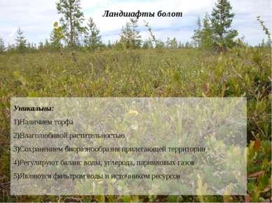 Ландшафты болот Уникальны: Наличием торфа Влаголюбивой растительностью Сохран...