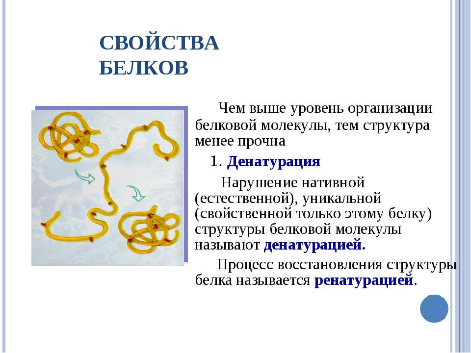 СВОЙСТВА БЕЛКОВ Чем выше уровень организации белковой молекулы, тем структура...