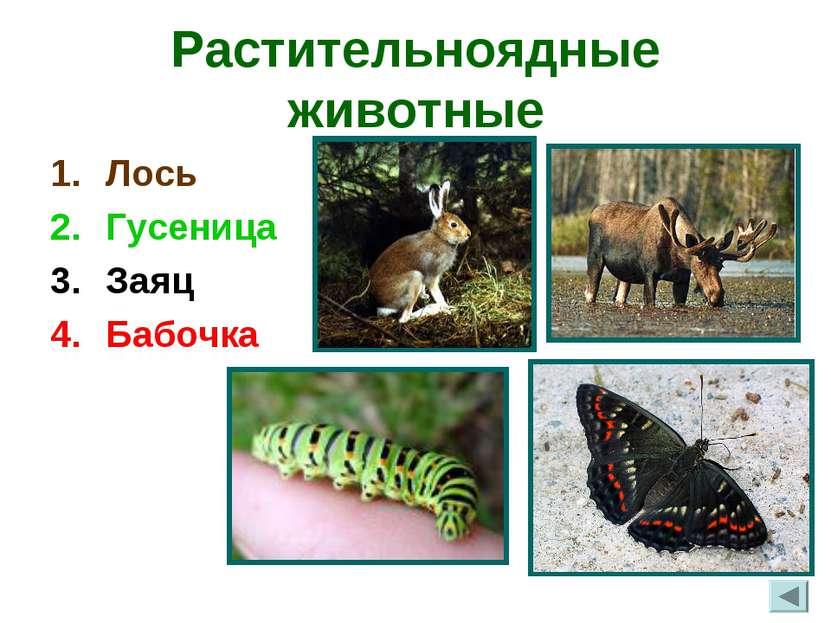 Растительноядные животные Лось Гусеница Заяц Бабочка
