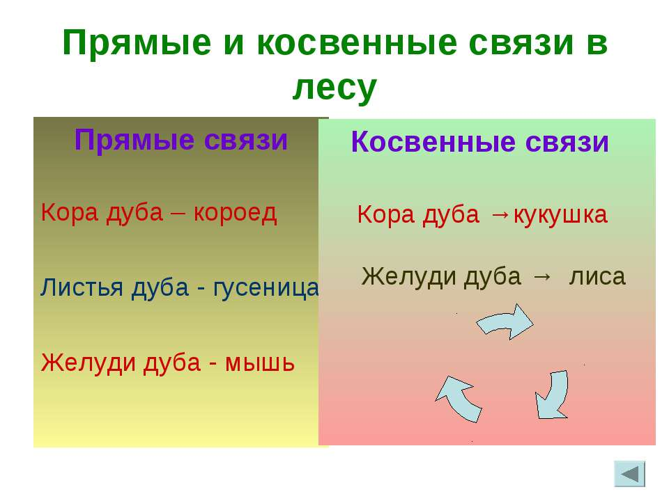 Прямые и косвенные связи в лесу Прямые связи Кора дуба – короед Листья дуба -...