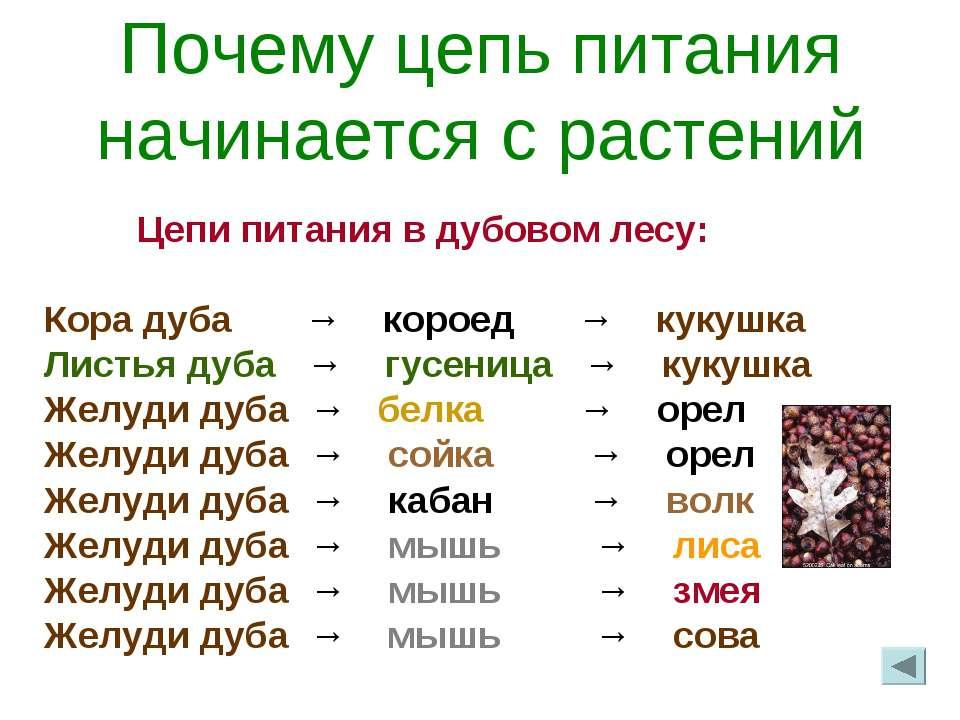 Почему цепь питания начинается с растений Цепи питания в дубовом лесу: Кора д...