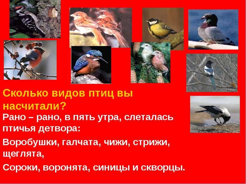 Сколько видов птиц вы насчитали? Рано – рано, в пять утра, слеталась птичья д...