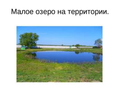 Малое озеро на территории.