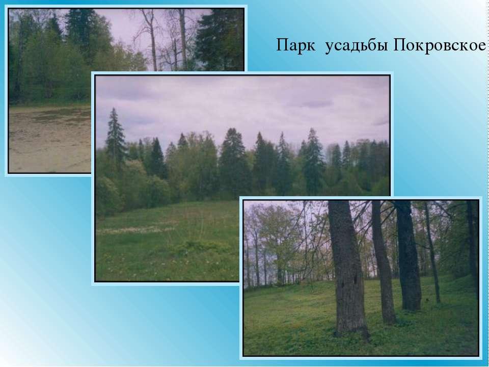 Парк усадьбы Покровское