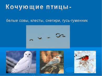 белые совы, клесты, снегири, гусь-гуменник