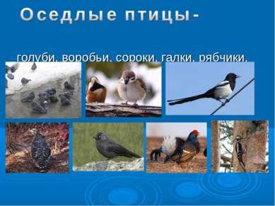 голуби, воробьи, сороки, галки, рябчики, тетерева, дятлы.