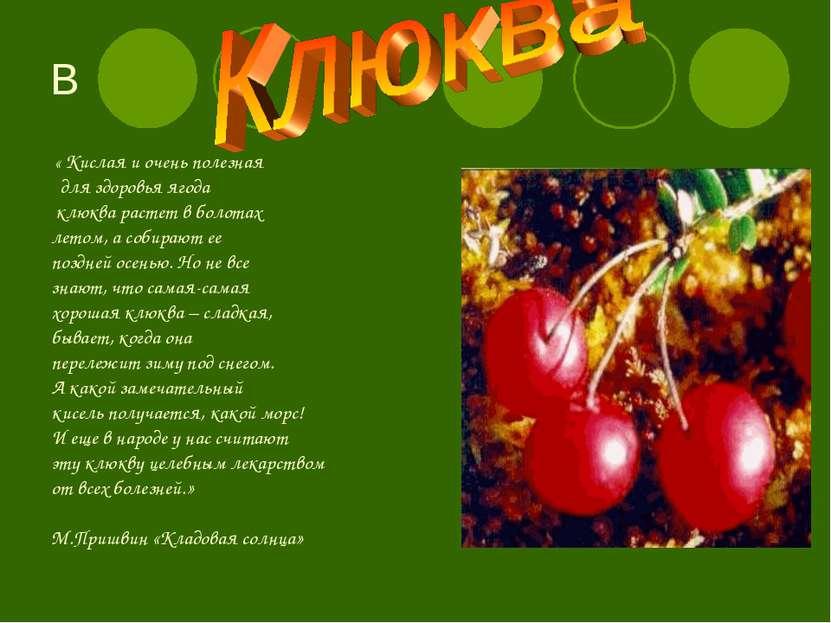 В « Кислая и очень полезная для здоровья ягода клюква растет в болотах летом,...