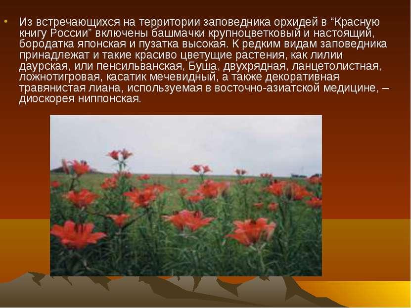 """Из встречающихся на территории заповедника орхидей в """"Красную книгу России"""" в..."""