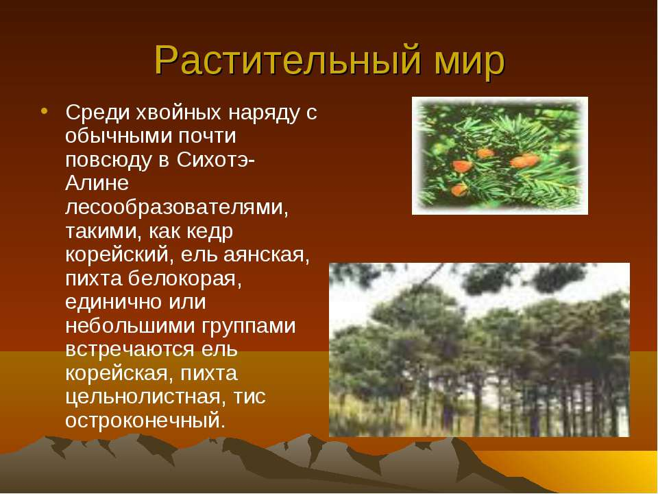 Растительный мир Среди хвойных наряду с обычными почти повсюду в Сихотэ-Алине...