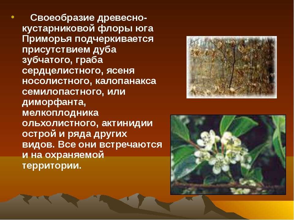 Своеобразие древесно-кустарниковой флоры юга Приморья подчеркивается присутст...