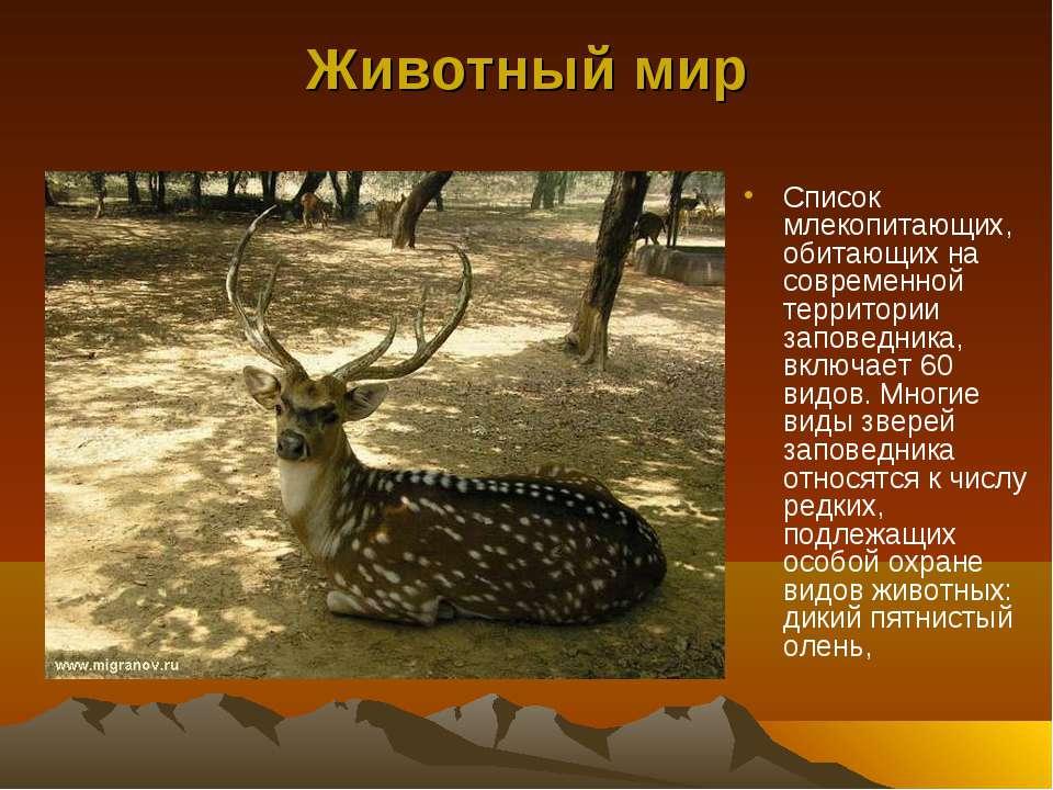 Животный мир Список млекопитающих, обитающих на современной территории запове...