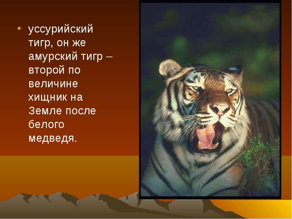 уссурийский тигр, он же амурский тигр – второй по величине хищник на Земле по...