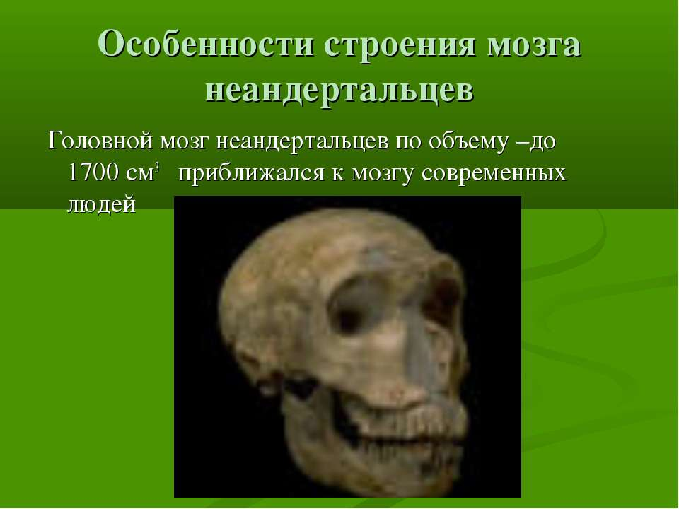 Особенности строения мозга неандертальцев Головной мозг неандертальцев по объ...