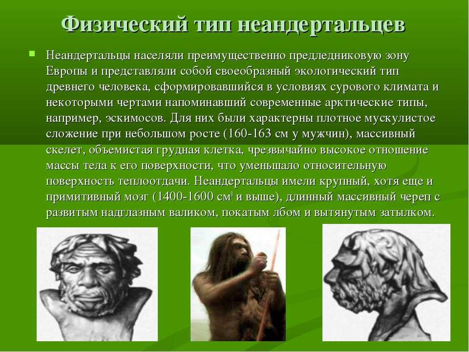 Физический тип неандертальцев Неандертальцы населяли преимущественно предледн...