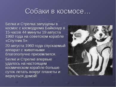 Собаки в космосе… Белка и Стрелка запущены в космос с космодрома Байконур в 1...