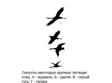 Силуэты некоторых крупных летящих птиц. А - журавль; Б - цапля; В - серый гус...
