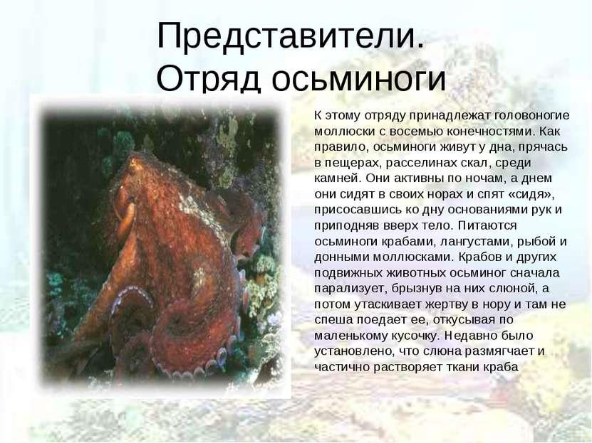 Представители. Отряд осьминоги К этому отряду принадлежат головоногие моллюск...