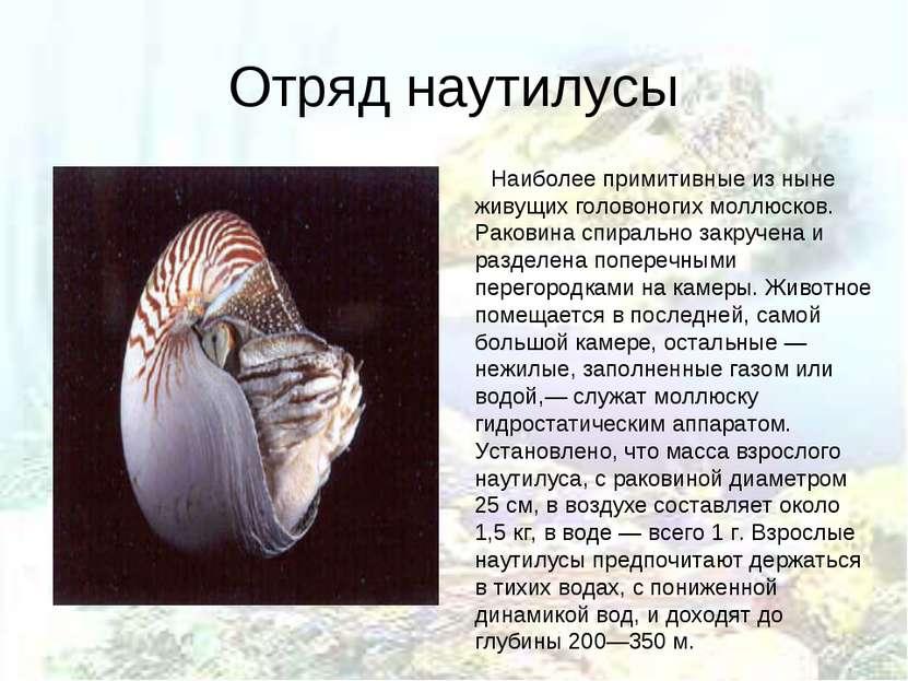 Отряд наутилусы Наиболее примитивные из ныне живущих головоногих моллюсков. Р...