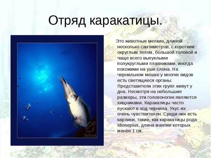 Отряд каракатицы. Это животные мелкие, длиной несколько сантиметров, с коротк...