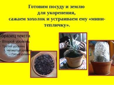Готовим посуду и землю для укоренения, сажаем хохолок и устраиваем ему «мини-...
