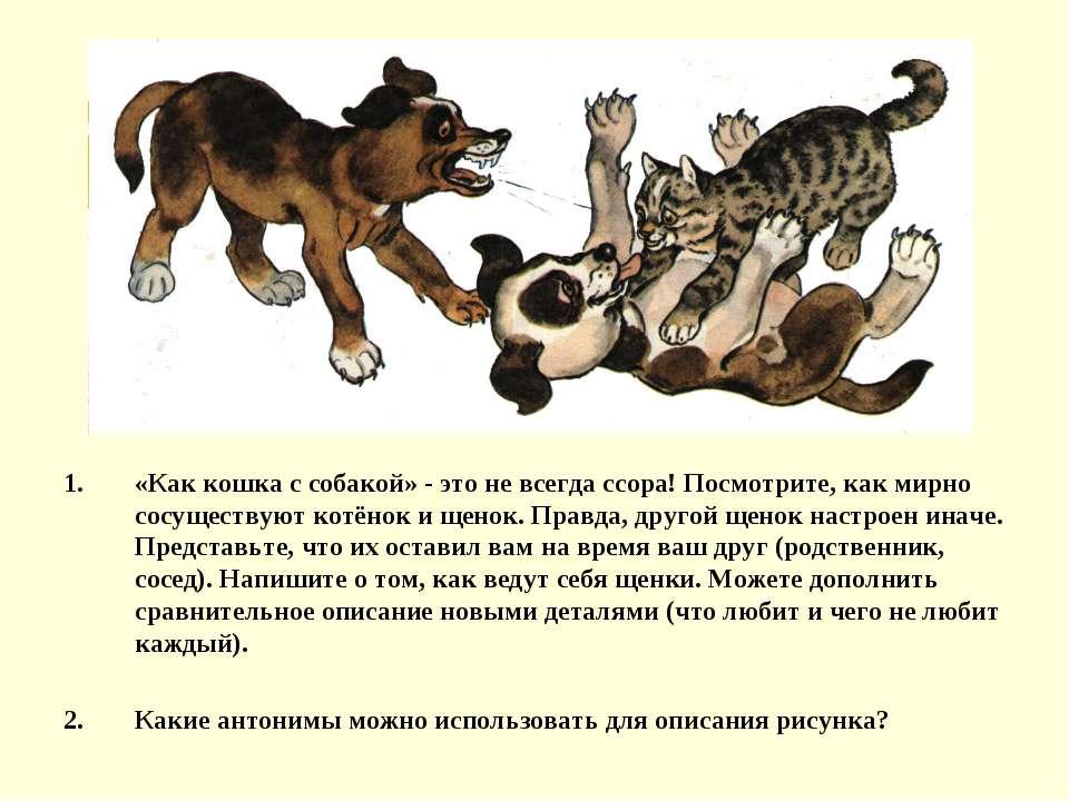 «Как кошка с собакой» - это не всегда ссора! Посмотрите, как мирно сосуществу...
