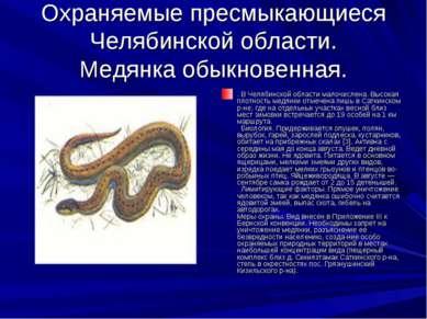 Охраняемые пресмыкающиеся Челябинской области. Медянка обыкновенная. . В Челя...