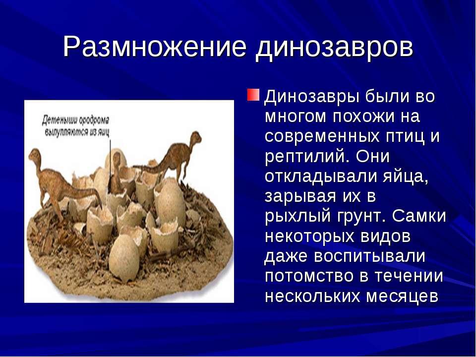 Размножение динозавров Динозавры были во многом похожи на современных птиц и ...