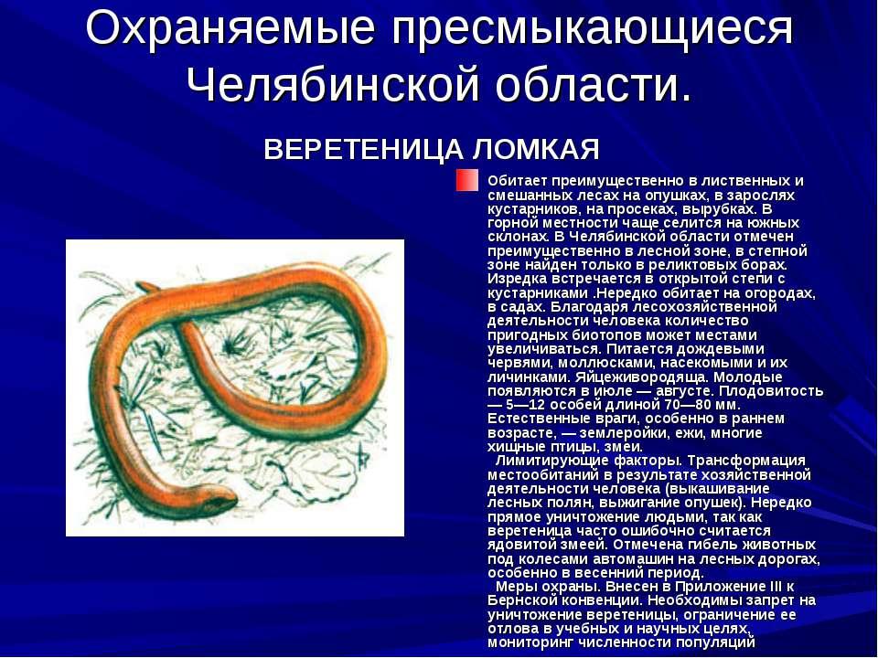 Охраняемые пресмыкающиеся Челябинской области. ВЕРЕТЕНИЦА ЛОМКАЯ Обитает преи...