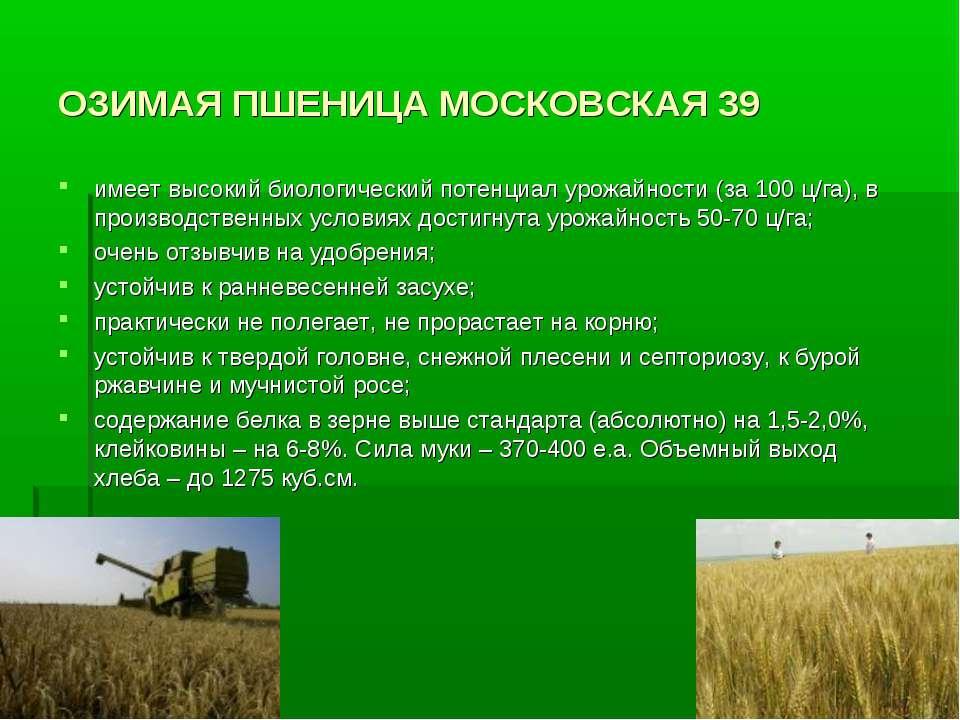 ОЗИМАЯ ПШЕНИЦА МОСКОВСКАЯ 39 имеет высокий биологический потенциал урожайност...