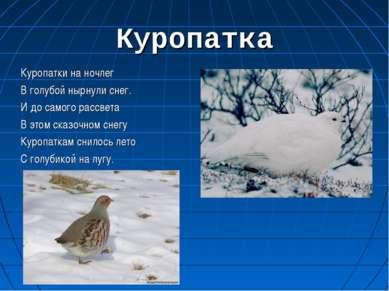 Куропатка Куропатки на ночлег В голубой нырнули снег. И до самого рассвета В ...