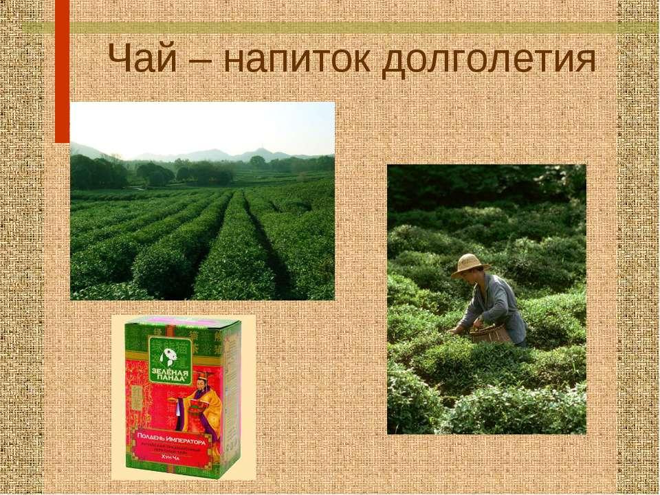 Чай – напиток долголетия
