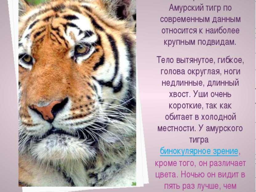 Тигр - крупное хищное млекопитающее семейства кошачьих оранжево-желтой с черн...