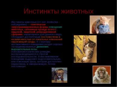 Инстинкты животных  Инстинкты животных (от лат. instinctus – побуждение) —...