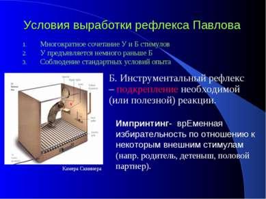 Условия выработки рефлекса Павлова Многократное сочетание У и Б стимулов У пр...