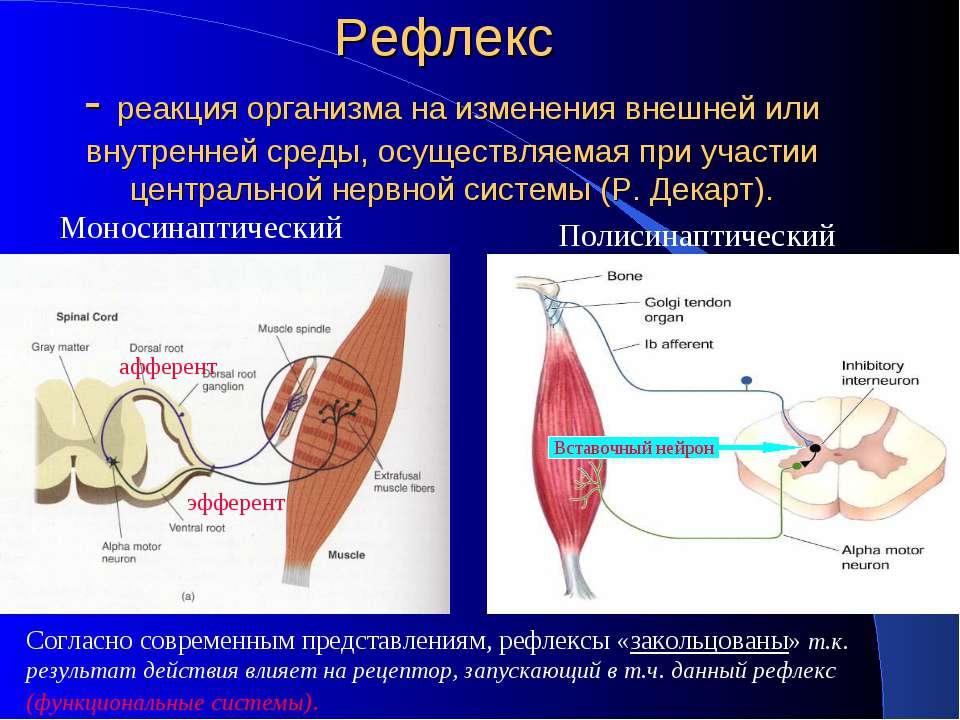 Рефлекс - реакция организма на изменения внешней или внутренней среды, осущес...