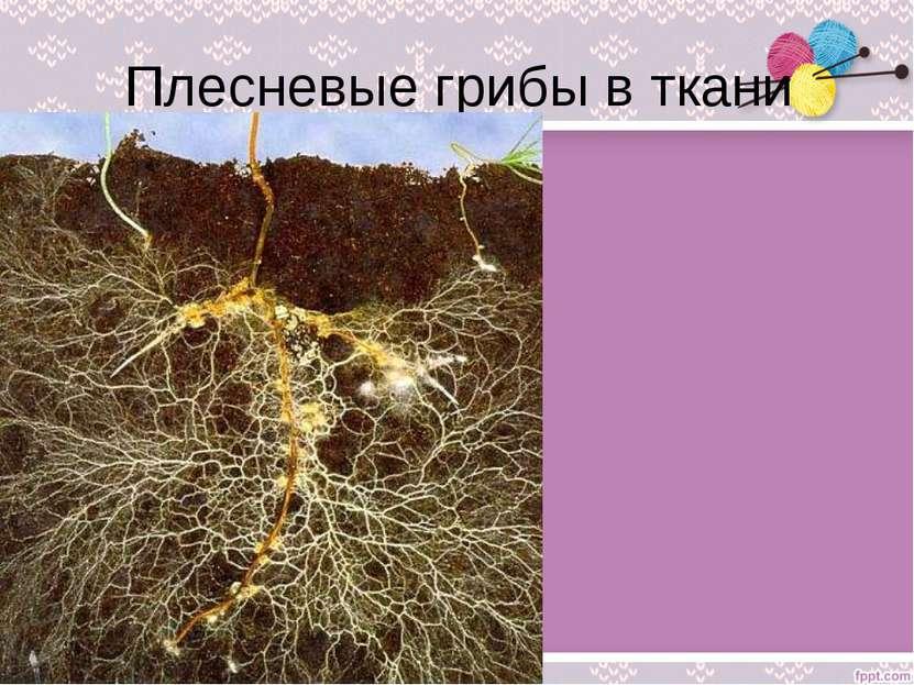 Плесневые грибы в ткани