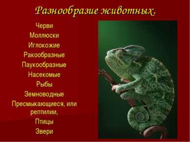 Разнообразие животных. Черви Моллюски Иглокожие Ракообразные Паукообразные На...