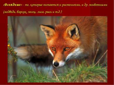 «Всеядные» - те, которые питаются и растениями, и др. животными (медведь, бар...