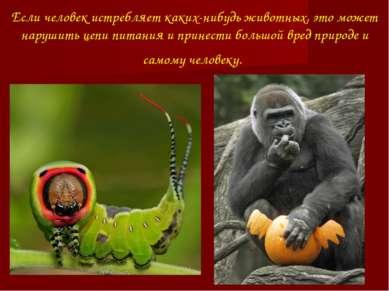 Если человек истребляет каких-нибудь животных, это может нарушить цепи питани...