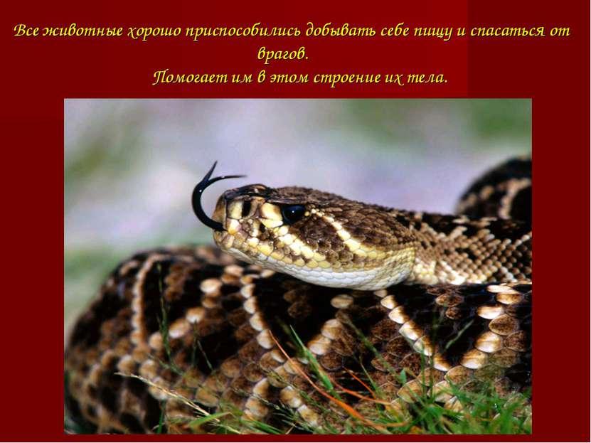 Все животные хорошо приспособились добывать себе пищу и спасаться от врагов. ...