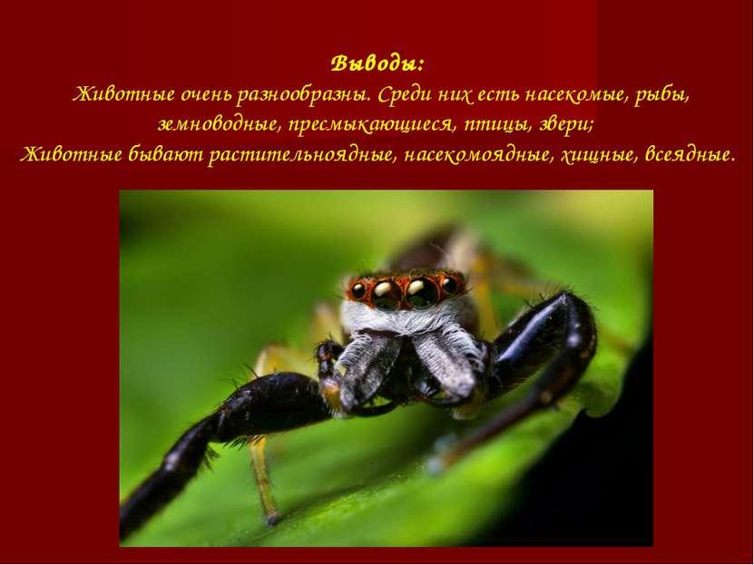 Выводы: Животные очень разнообразны. Среди них есть насекомые, рыбы, земновод...