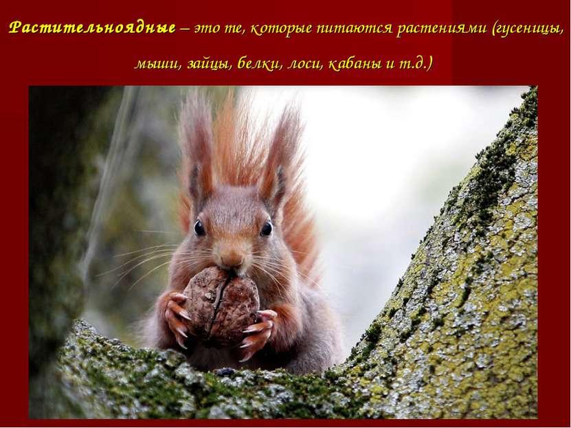 Растительноядные – это те, которые питаются растениями (гусеницы, мыши, зайцы...